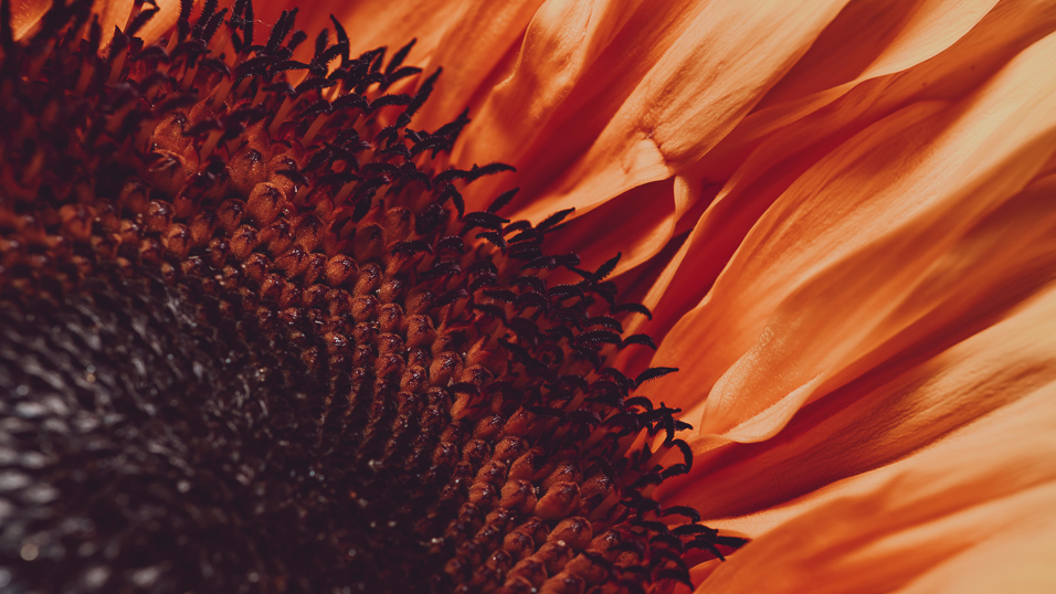 bloom(16x9)