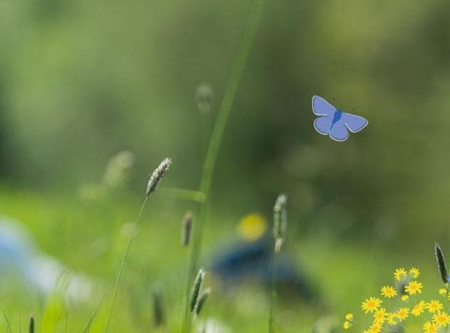 Wildlife Trusts Drupal Case Study